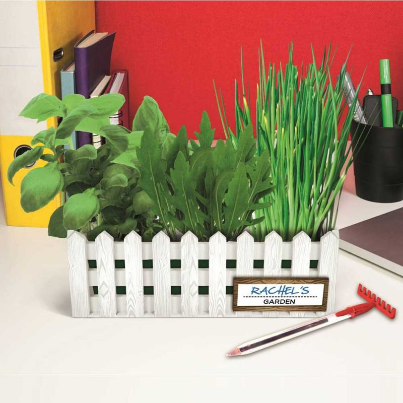 Desktop Garden Herb Set Grow Your Own Kit For Your Office Space