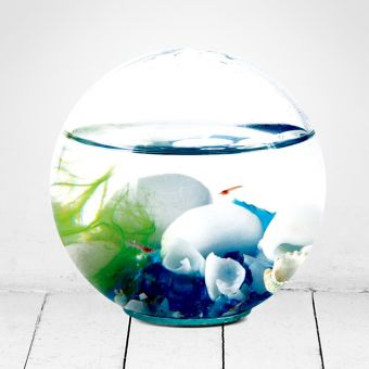 Red Shrimp Glass Sphere Ecosystem