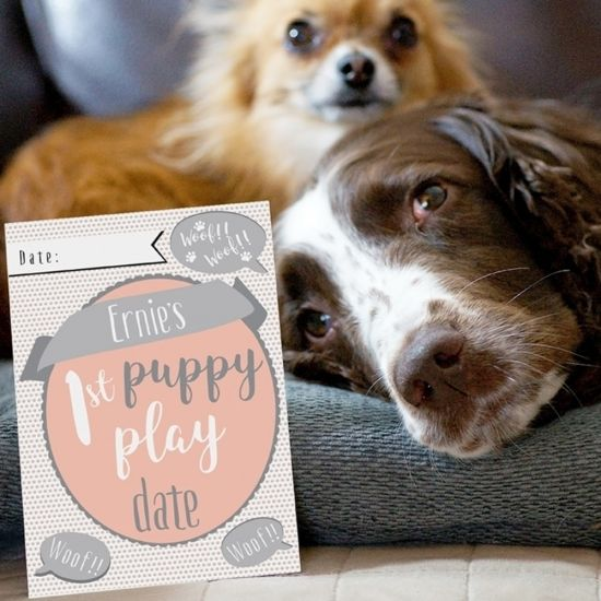Puppy Cards - Lifestyle