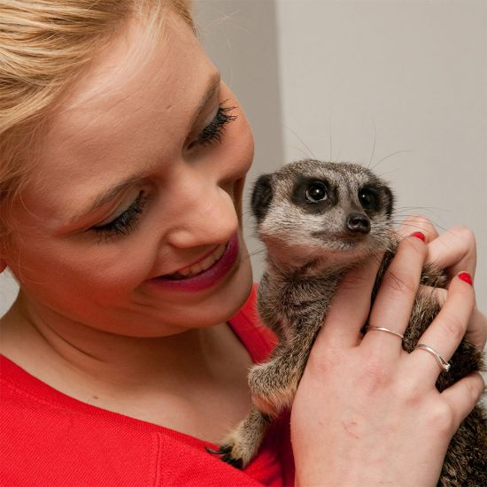 Meerkat Encounter for Two-Lifestyle