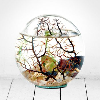 Beachworld Glass Sphere with Gorgonia Ecosystem