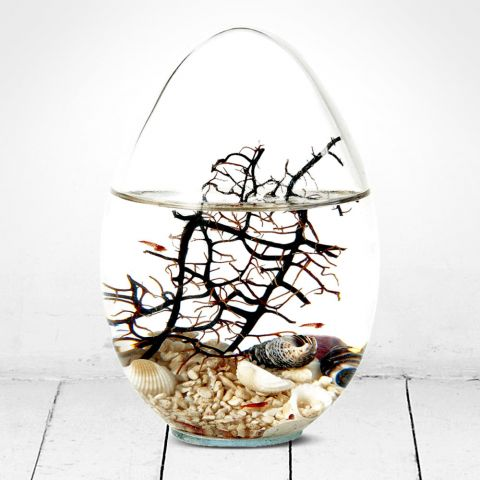 Beachworld Glass Egg with Gorgonia Ecosystem